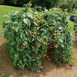 Sunflower Post