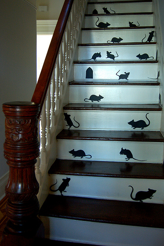 Mice on stairs