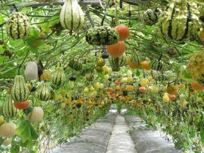 Pumpkin Archway